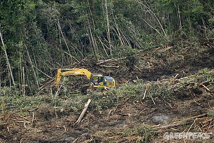 Pembukaan Lahan Sawit, Kerusakan Hutan BORNEO..